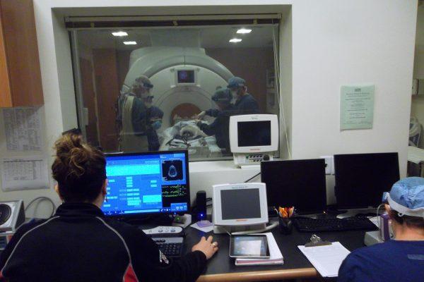 Marmoset MRI