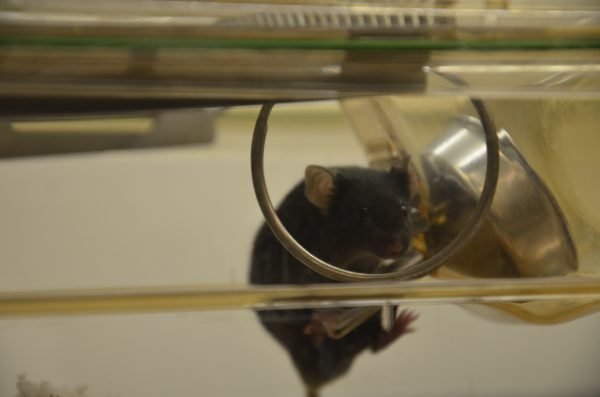 Mouse on shower ring