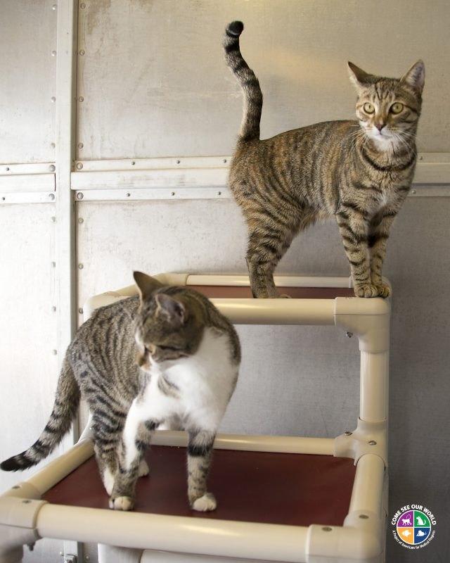 Advocate For Cats Without Vet Prescription Uk