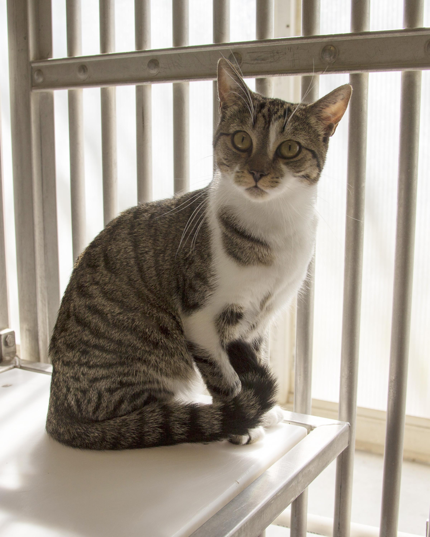 Sadie the Research Cat