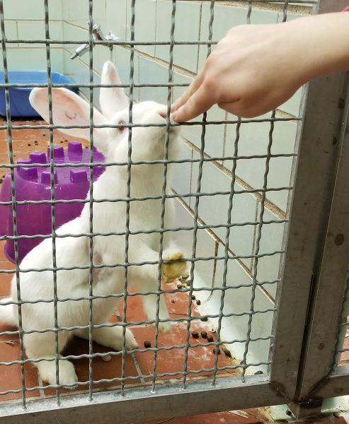 Positive reinforcement for bunny checks