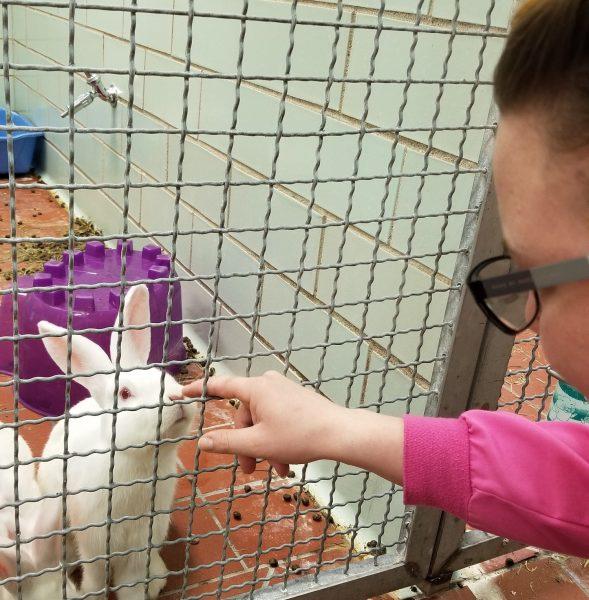 Rabbits enjoying human interaction