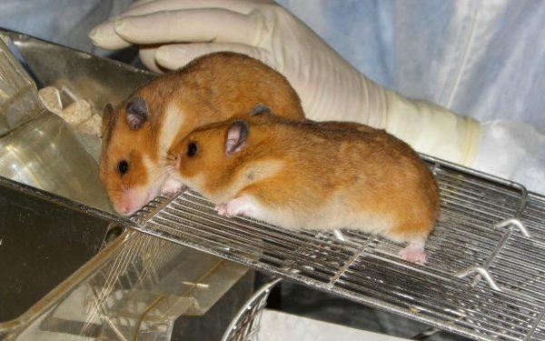 Handling Hamsters