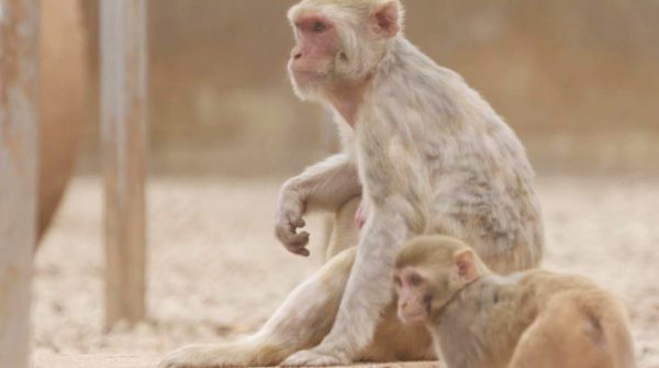 Love, Care, Progress: Inside a Nonhuman Primate Research Facility
